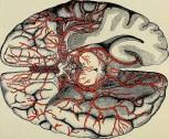 Кислородное голодание головного мозга - что это такое и как лечить?